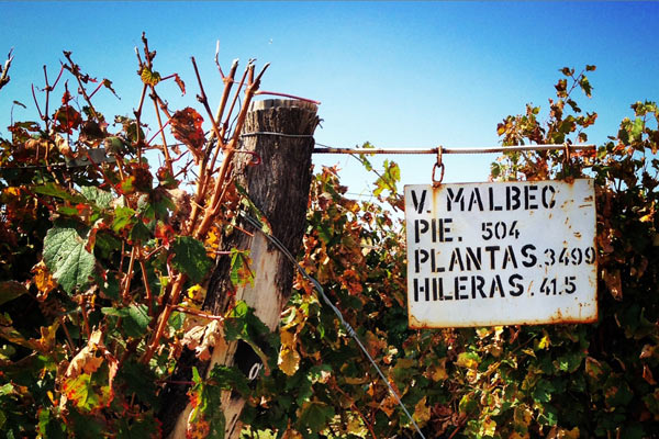 Vinalba Vineyards