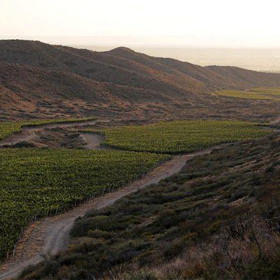 Vinalba_0007_Vinalba mendoza vineyards 15