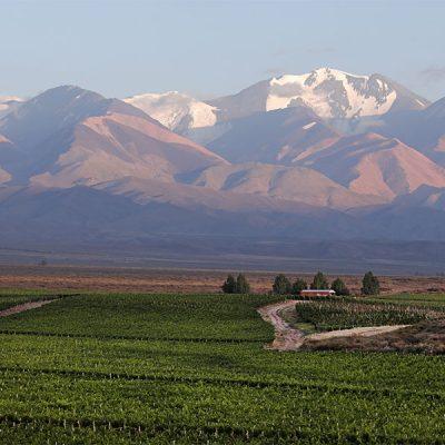 Vinalba_0008_Vinalba mendoza vineyards 13